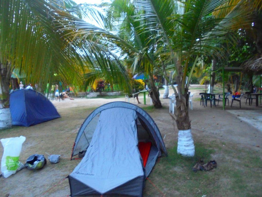 Caraïbes, plages et cocotiers