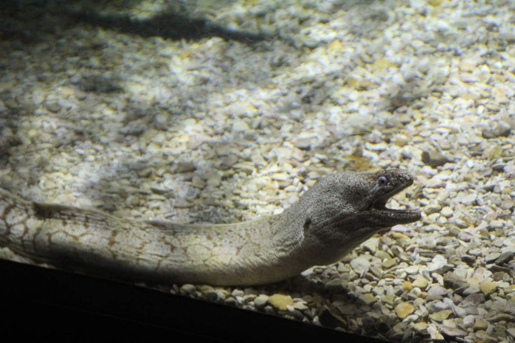 ~ Aquarium de la Rochelle ~