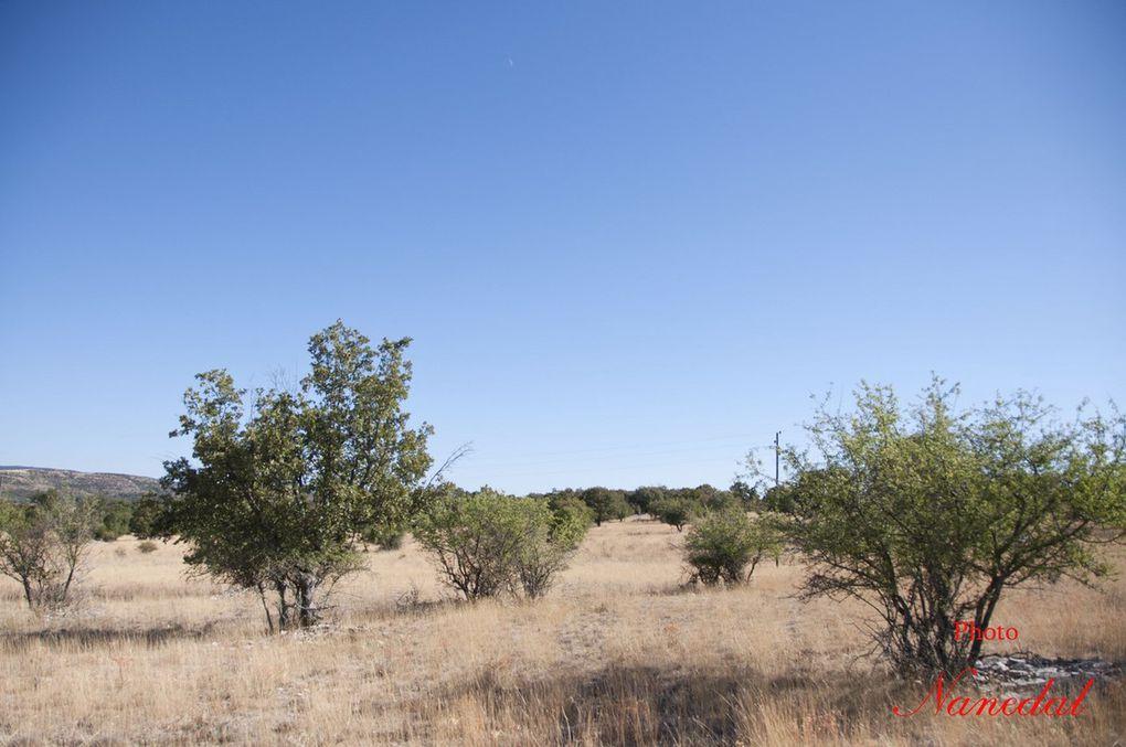 Diaporama : 4 photos. Le causse de Blandas.