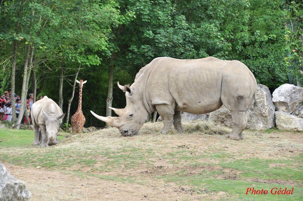 Diaporama 8 photos. Rhinocéros.