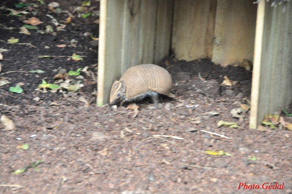 Diaporama 7 photos. Tapir.