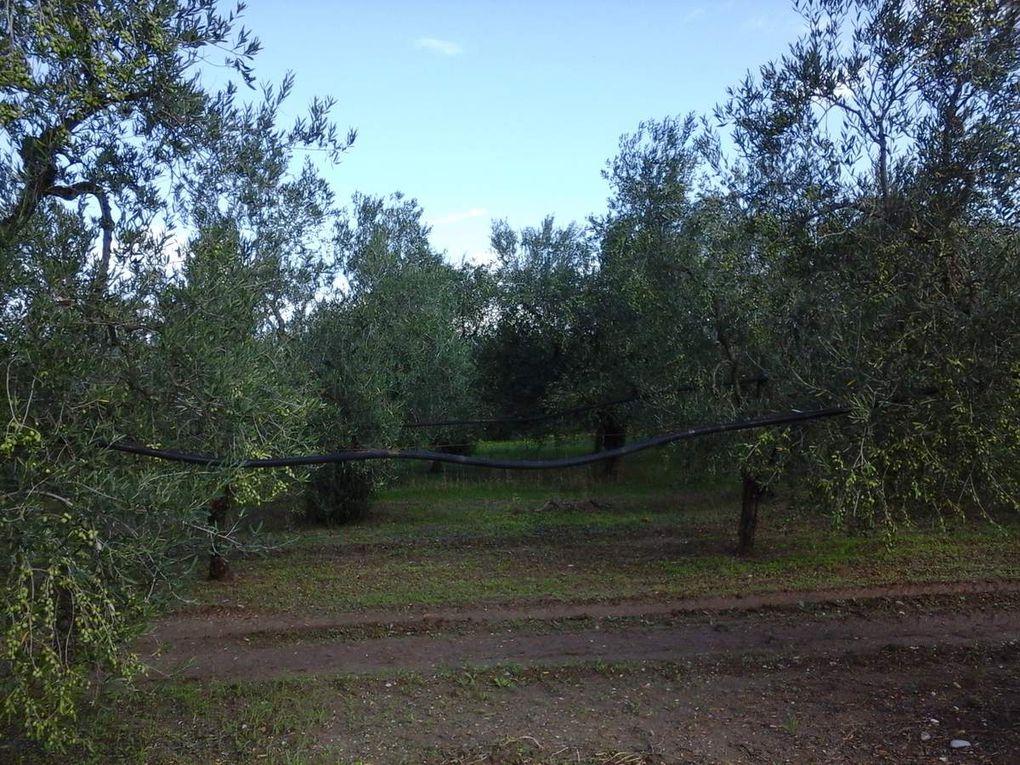20 septembre  - de Cerignola à  Canosa