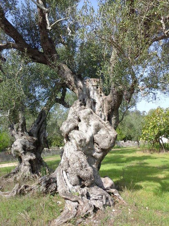 1er octobre - de Lecce à  Calimera