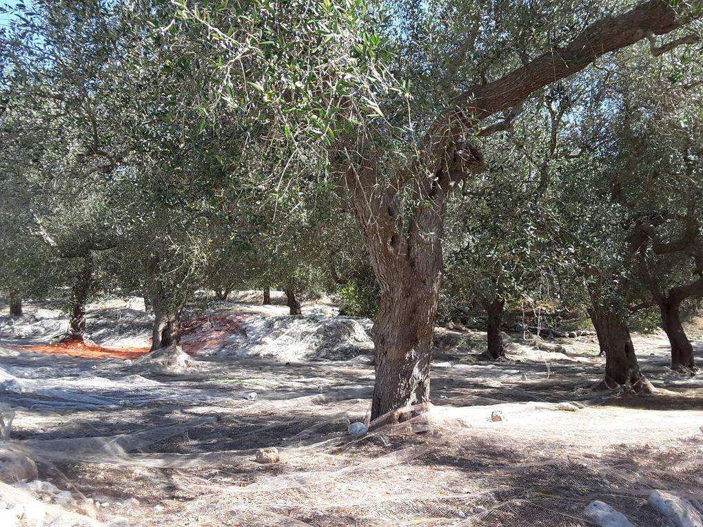4 octobre - de Otranto à  Vignacastrisi