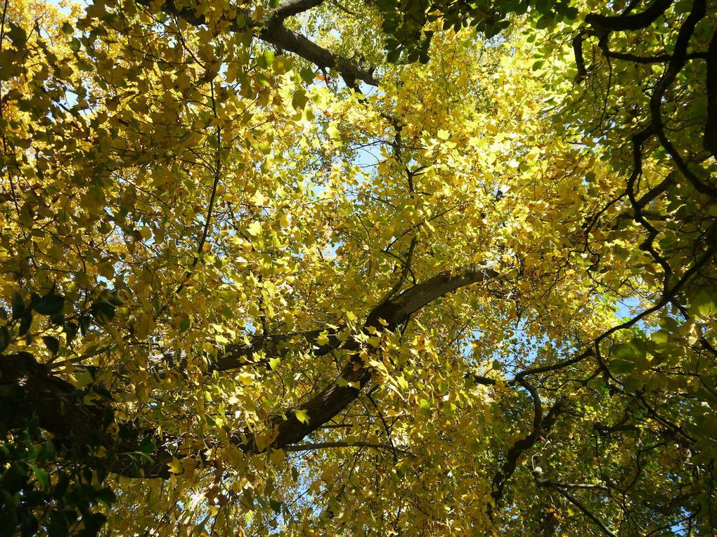 (29 octobre 2016, jardin des plantes de Nantes. Crédits photos Sandrine Scardigli)