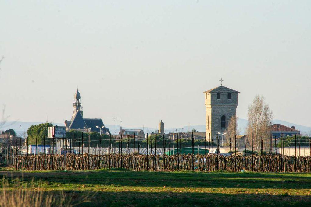 Villeneuve les Maguelones, ses vignes et sa cathédrale romane.