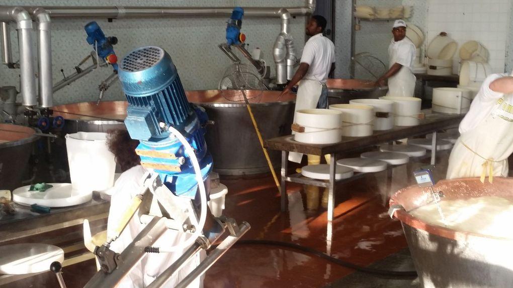 SM Visit at the Parmesan factory