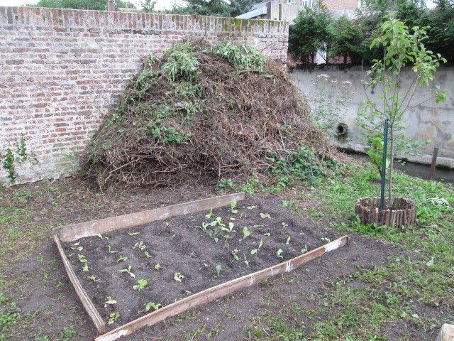 Jardin, du retard... tomates et salades