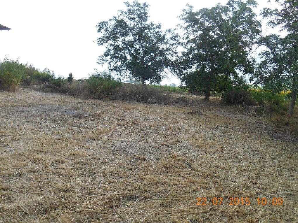 le terrain est plus net. On a même retrouvé le puit.