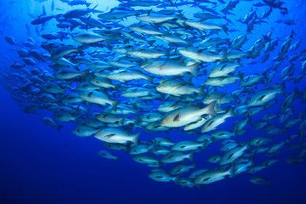Le Parc naturel marin du cap Corse et de l'Agriate :