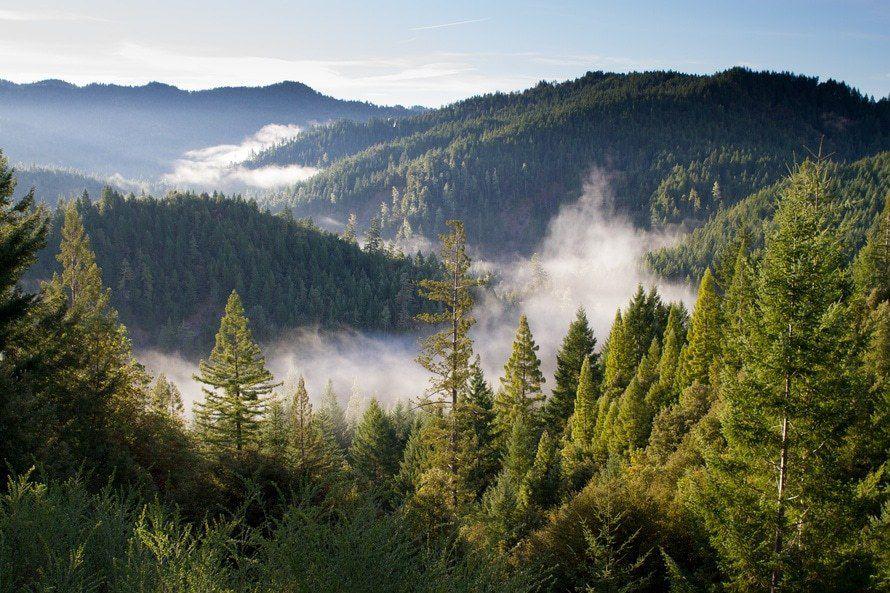 Le projet de loi relatif à la reconquête de la biodiversité, de la nature et des paysages a été adopté :