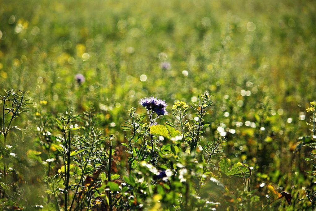 La fin de l'utilisation des pesticides par les personnes publiques :
