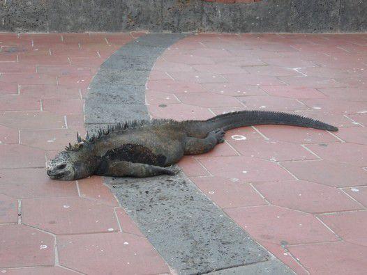 Galapagos, premières impressions.