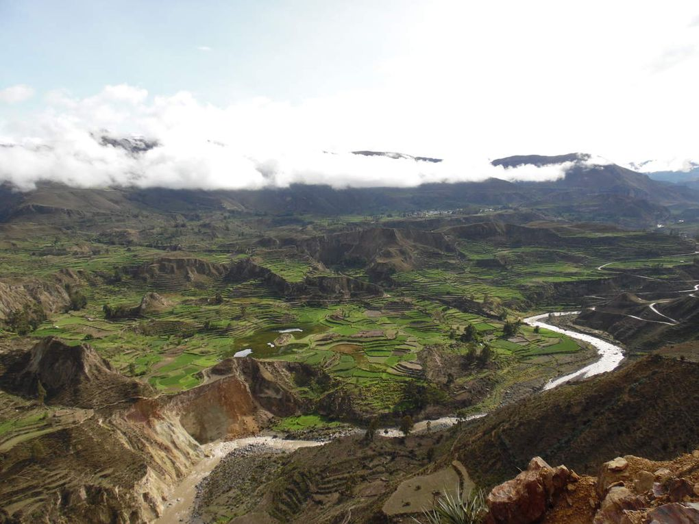 Champs en terrasses du Canyon de Colca.