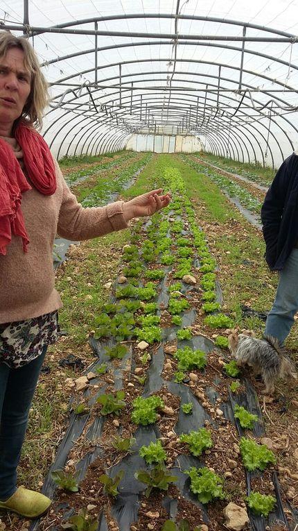 Printemps des AMAP &#x3B; des oiseaux de la Nartuby aux légumes de Corinne et Laurent, une journée vraiment sympa.