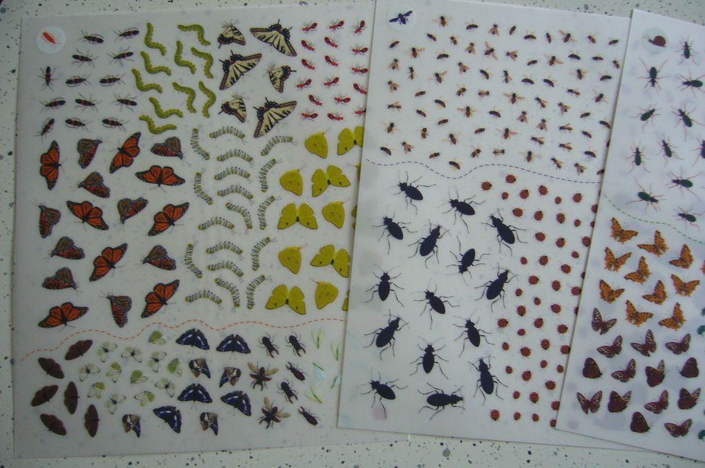 Livre de décalcomanies papillons et autres petites bêtes - Activités enfants