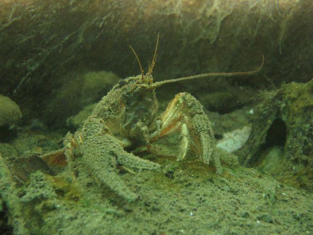 Daniel Rodriguez, membre de Galathéa club (association de plongée sous-marine), nous amène sous la surface du lac de Sède.