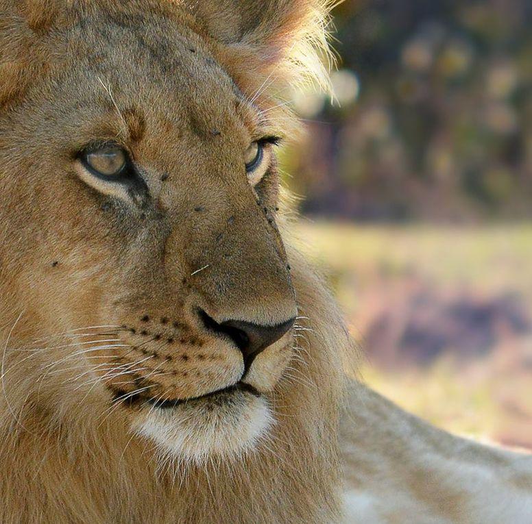 Afrique. Ibrahim Nagar,  Brothers in dialogue. At the Massai mara nature resserve - Kenya.