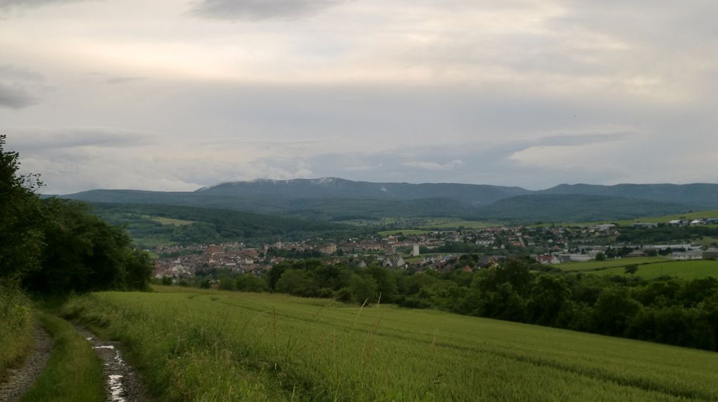 Vues sur Wasselonne, le massif du Schneeberg et les sommets au dessus de la région savernoise.