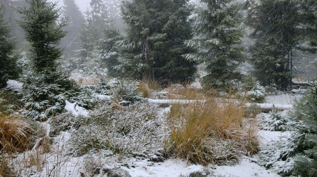 Superbe manteau blanc qui recouvre les paysages d'automne. Les herbes sèches contrastent avec cette blancheur.
