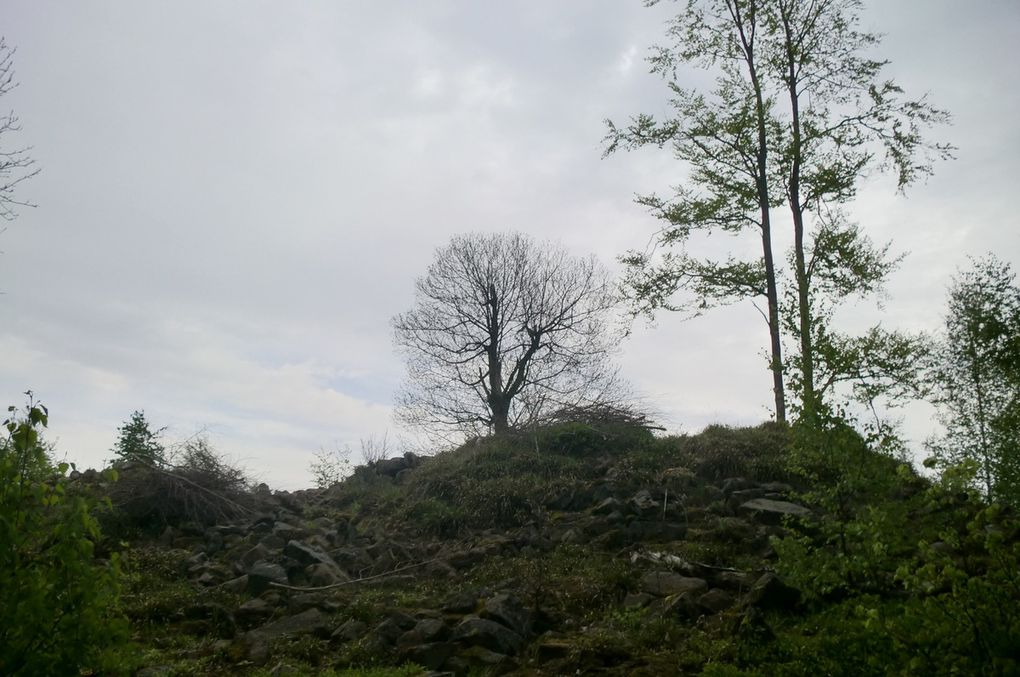 Vestiges du camp du Purpurkopf