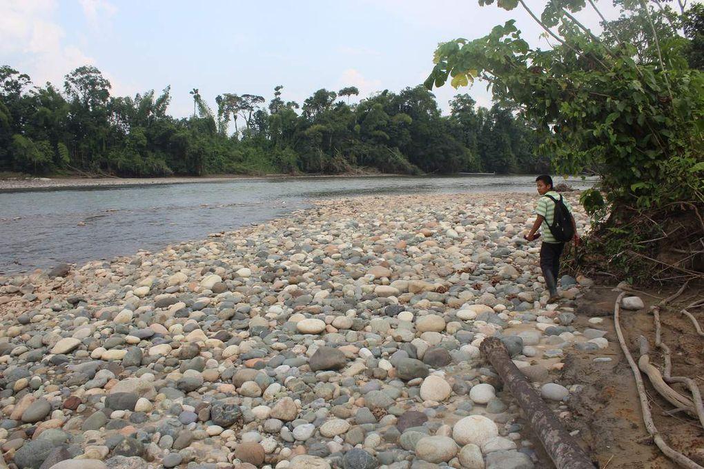 Un petit coup de pêche au filet dans la rivière. On n'a pas attrapé grand chose...