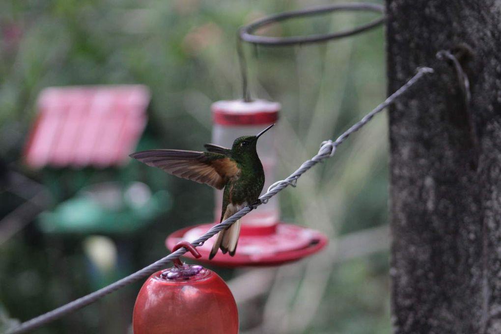Un moment magique au milieu des colibris. Un bonheur de pouvoir les approcher d'aussi près.