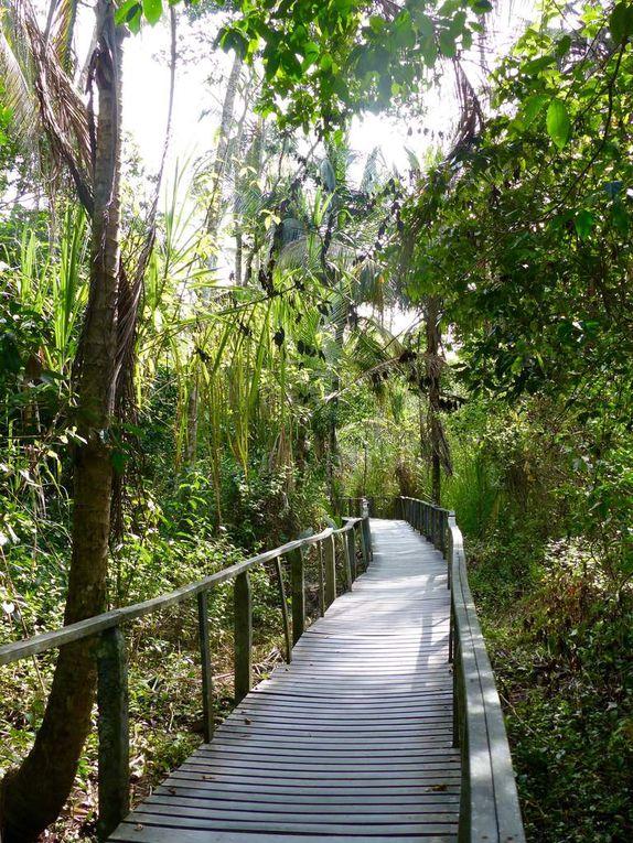 Côte caraïbe sud - Puerto Viejo &amp&#x3B; Cahuita