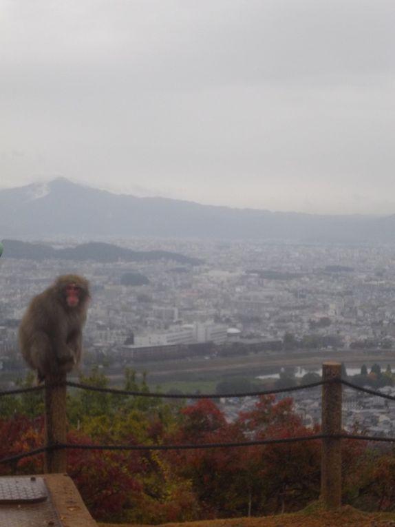 Nos amis les macaques.