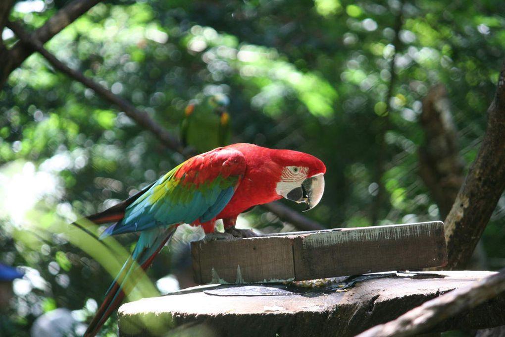 Enclos des perroquets