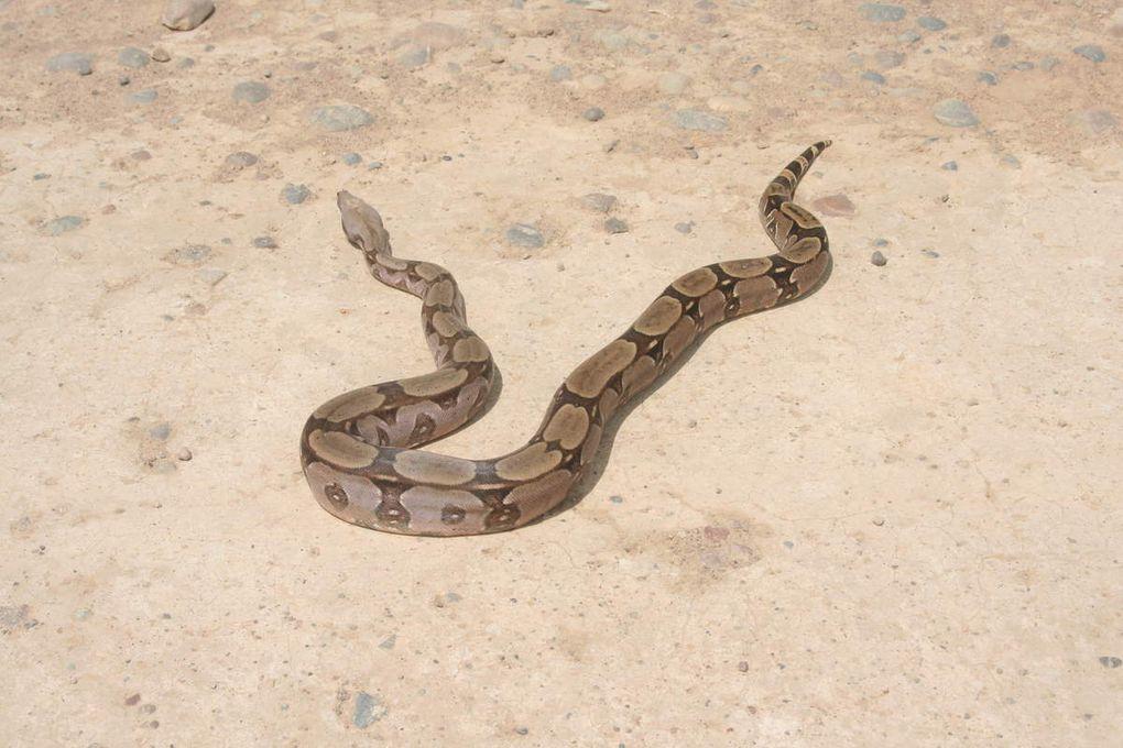 Arrêt boa constrictor