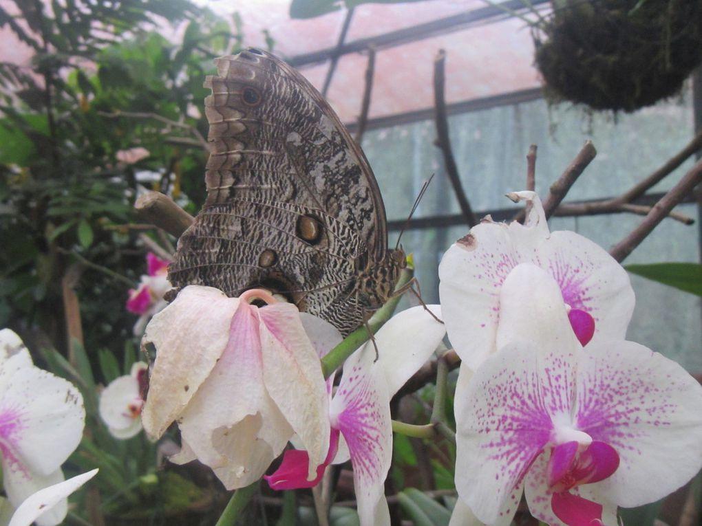 Mindo, paradis des colibris et des papillons