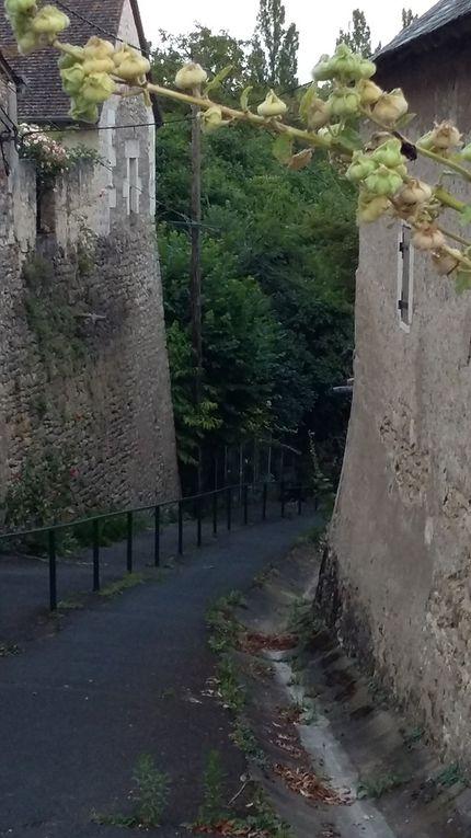 Inscription par mail a Contact ou veroset@free.fr / 10km de vignes, de sentiers et de forêts sur les hauteurs du Beuvron. Village historique fortifié