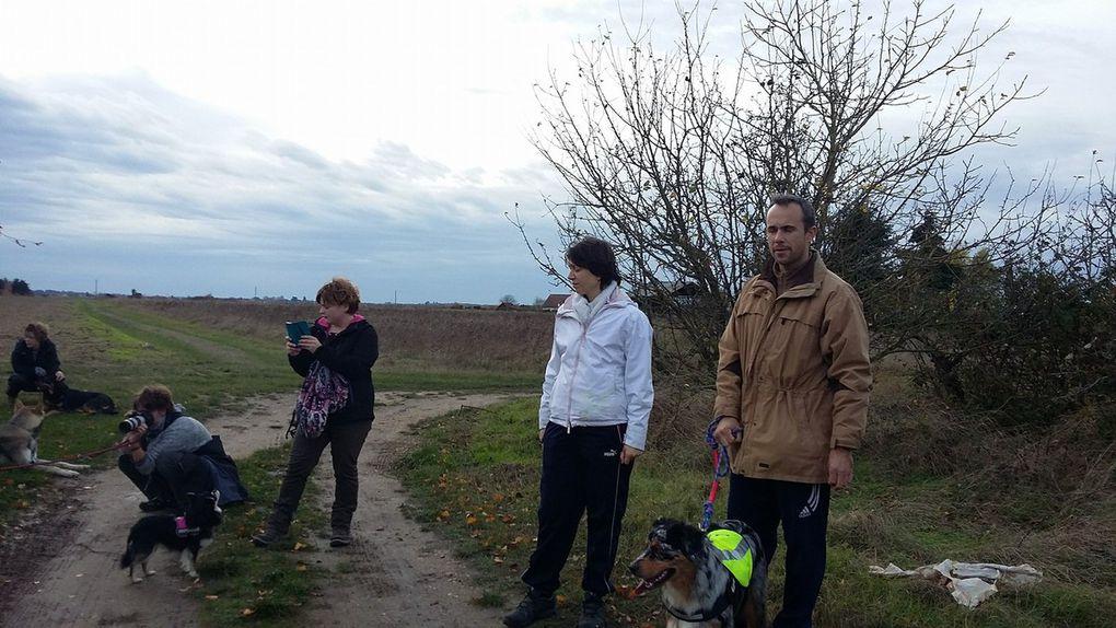 Photos et petit récap de la 7éme Rando Canine de Saint Dyé sur Loire le 20/11/2016