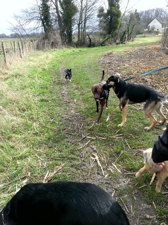 8ème Rando Canine : Cellettes le 26.02.2017