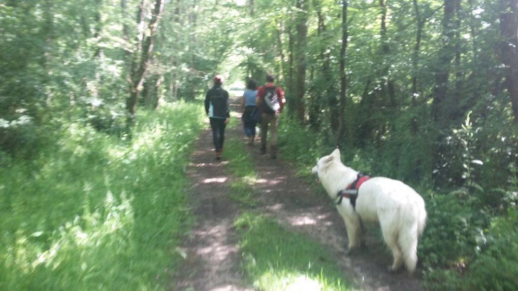 11ème Rando Canine : Ouchamps le 21/05/2017