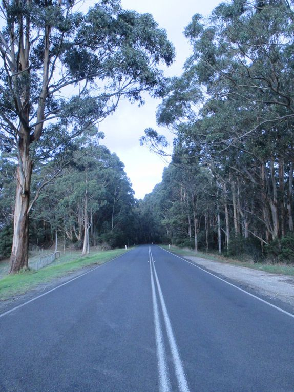J34 : Sur la Great Ocean Road