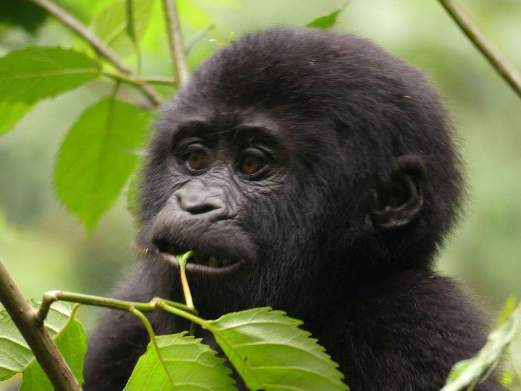 17 Uganda - 17. Februar bis 1. März 2017