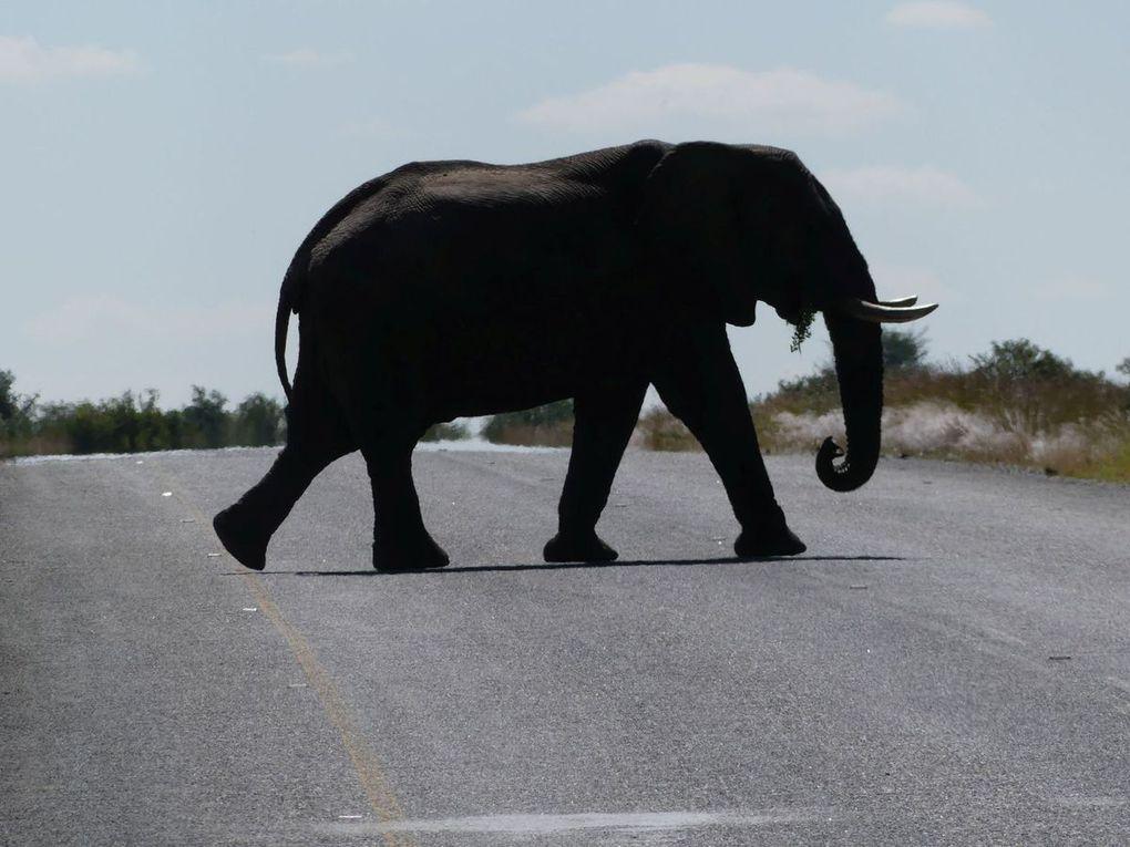 27 Botswana - 27. April bis 3. Mai 2017