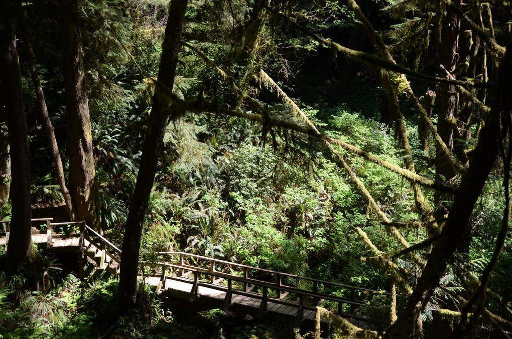 Vers l'Ouest de Vancouver Island : Tofino ...