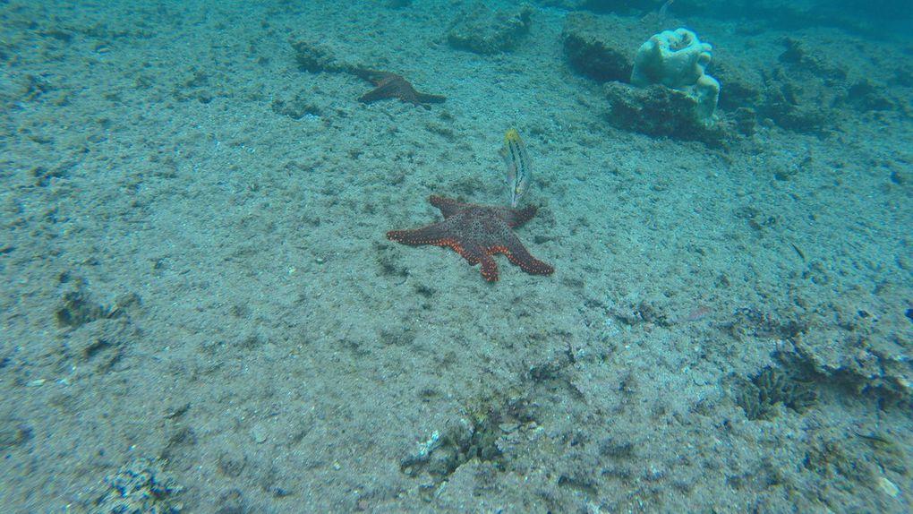 Vie aquatique (Snorkeling)