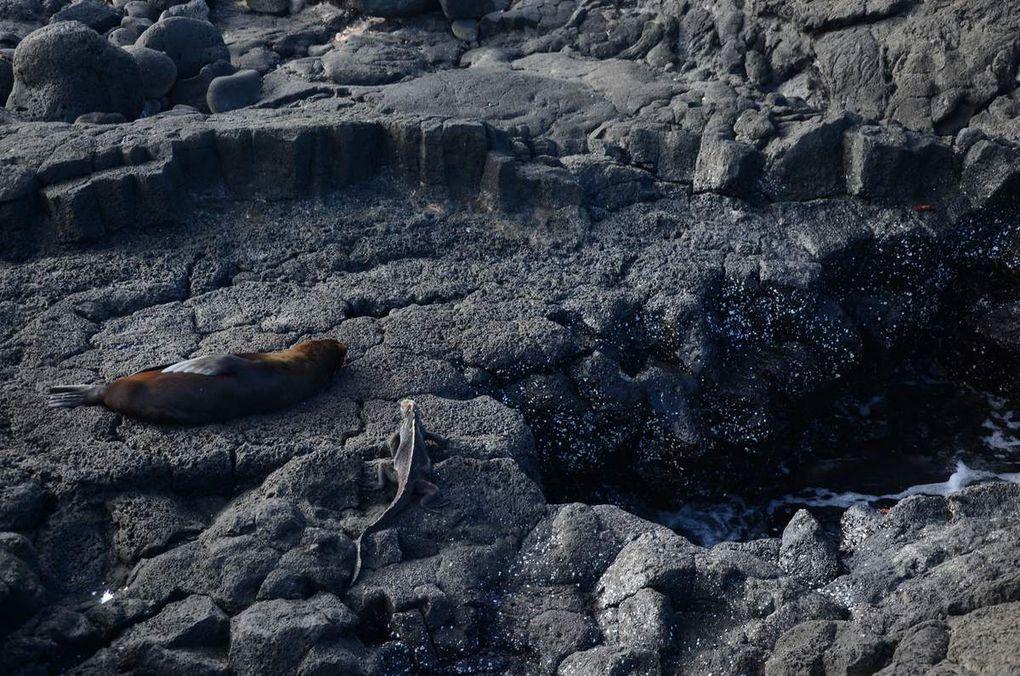Photos paysages et animaux terrestres + Phoques sur terre