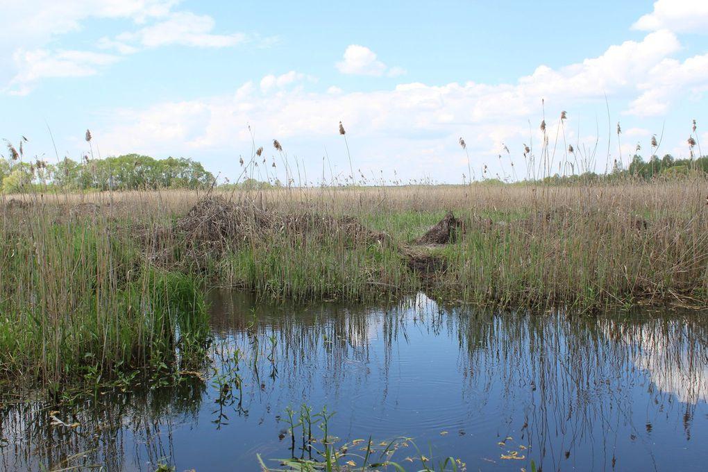 Białystok, Narwiański Park Narodowy, Tykocin &amp&#x3B;  Dwór Pentowo