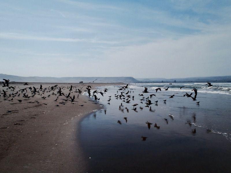Sur la route pacifique de l'Extrême nord chilien