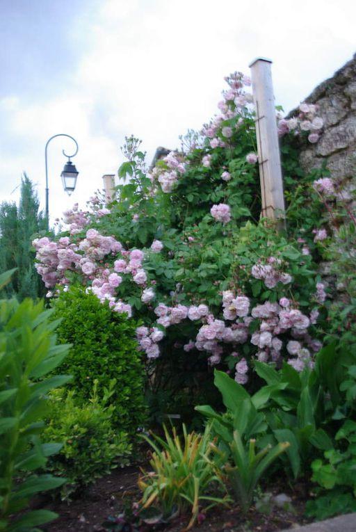 Sous la gloriette, petit jardin
