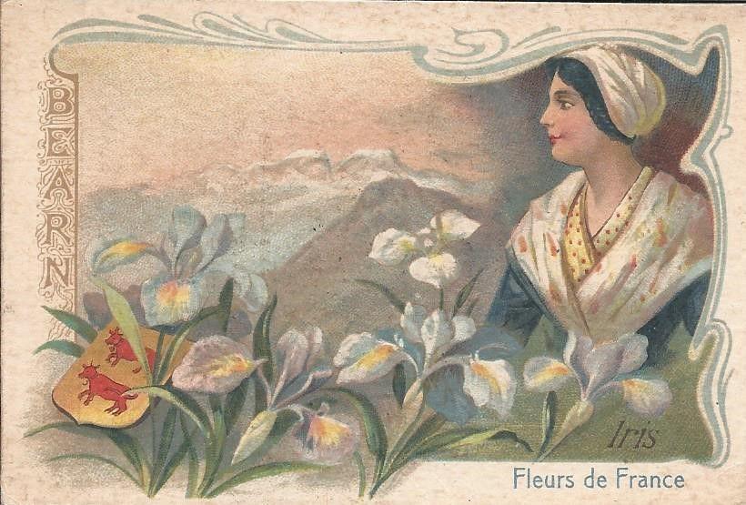 BEARN - FLEURS DE FRANCE - IRIS  (petite carte publicitaire)