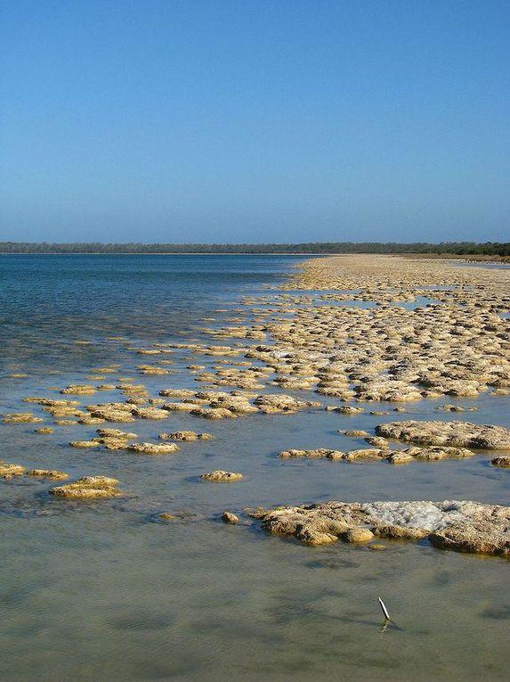 Succulente (ici joubarbe), lithops, lithops en fleur, stromatolithes en Australie.