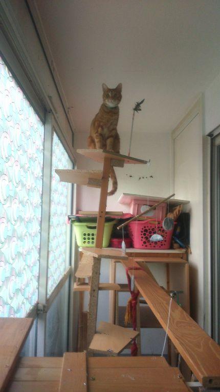 Je me suis demandé en construisant cette structure, si nos quatre chats allaient monté jusqu'au deux mètres de la dernière plaque du sommet. Longtemps ils ont hésité puis, il y à trois jours j'y ais mis un bouquet de plumes que j'ai fixé sur une tige métatique avec du gros scotch. Ni une ni deux, ils y sont allé sans hésiter. Quand on réfléchi, un chat ça saute 3 fois sa heuteur soit 1 mètre 50 tous comme le records félidé le PUMA qui saute à 5 mètres de hauteur. Par rapport à nous, quand je vois Haldor sur son perchoire en équilibre c'est comme si nous étions perché sur un toit mobile à 7 mètres de hauteur sans harnais ! En attendant j'ai fais une terrine au légumes ce matin dont on va savouré la délicate saveur.