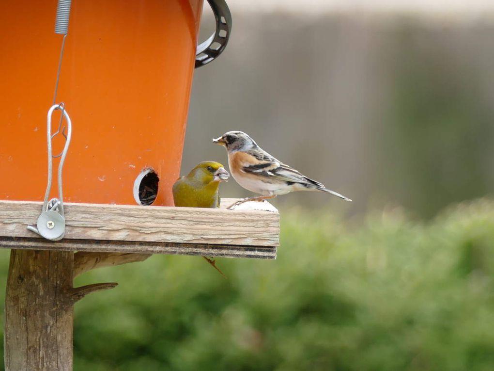 Un petit éventail des nombreux oiseaux qui viennent nous rendre visite. Nous avons répertoriés plus de 80 espèces différentes.