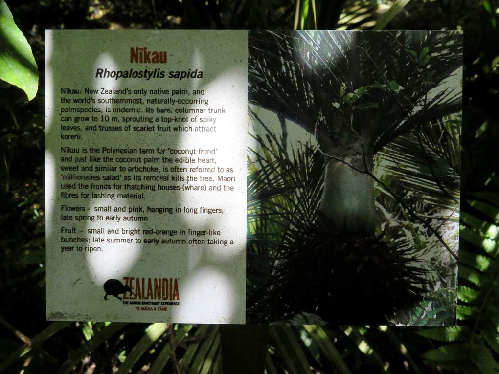 La palmier Nikau est endémique ici et c'est celui que l'on trouve le plus au sud sur la planète.